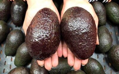 Receta Bagno: Helado de palta y limón