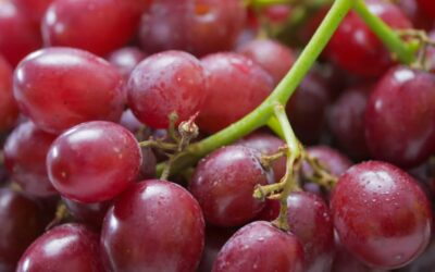 ¿Cuántos tipos de uvas existen?